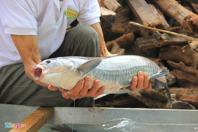 Cá kho làng Vũ Đại được kho 100% bằng cá trắm đen nuôi ốc
